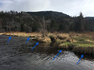 Arrows pointing to stream banks to show where trout could hide