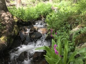 A mountain stream flowing through grass and wildflowers
