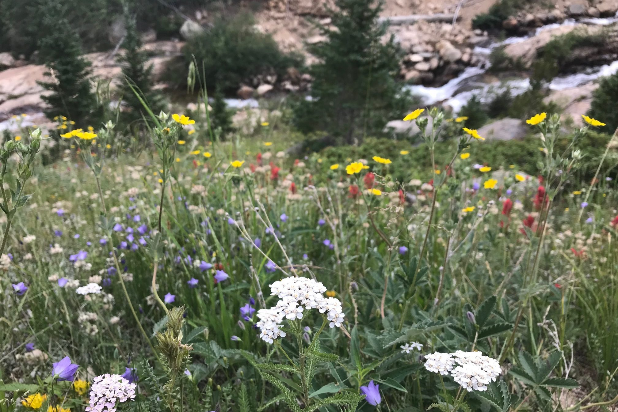 A field of flowers in front of a small stream.