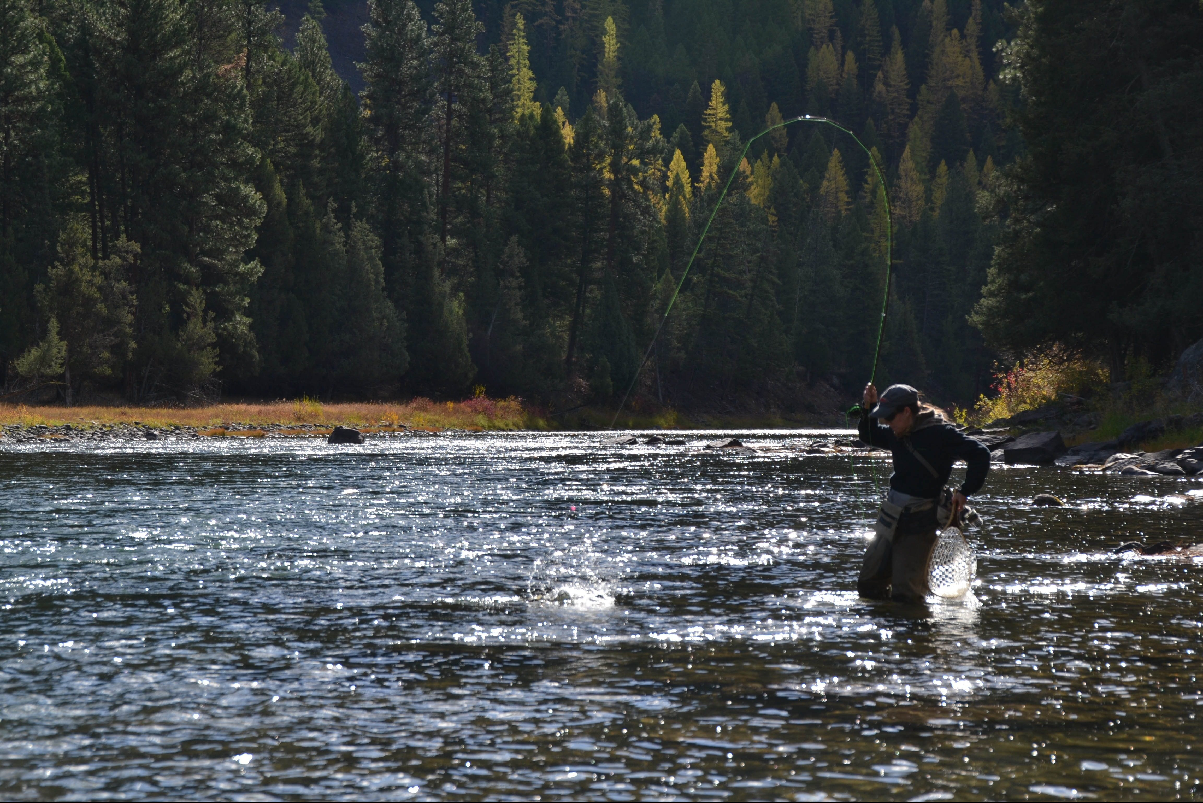 A woman brings in a fish on a fly rod while wading in a river.