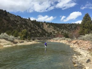 A woman wades across a river while fly fishing.