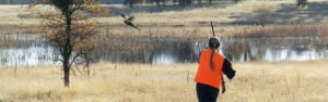 A female hunter flushing out a pheasant in front of a pond.
