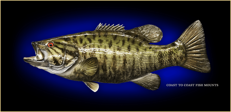 A fiberglass replica of a smallmouth bass