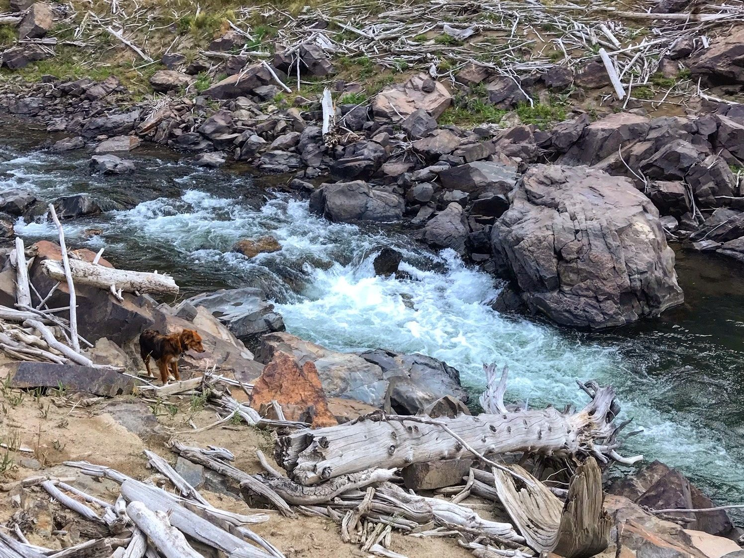 A dog walks on land near logs next to a roaring river.