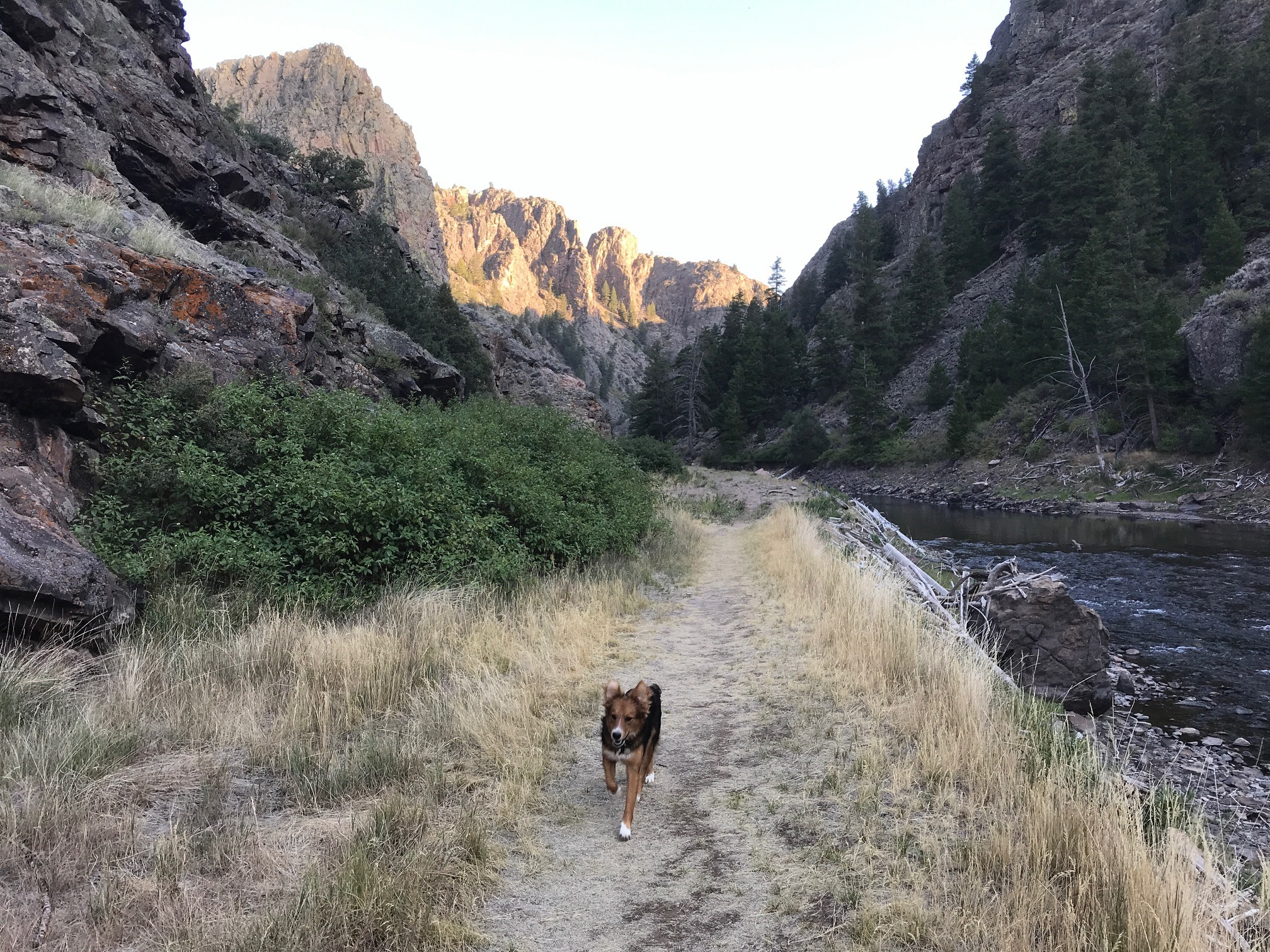 A dog runs along a trail next to a river in a canyon.
