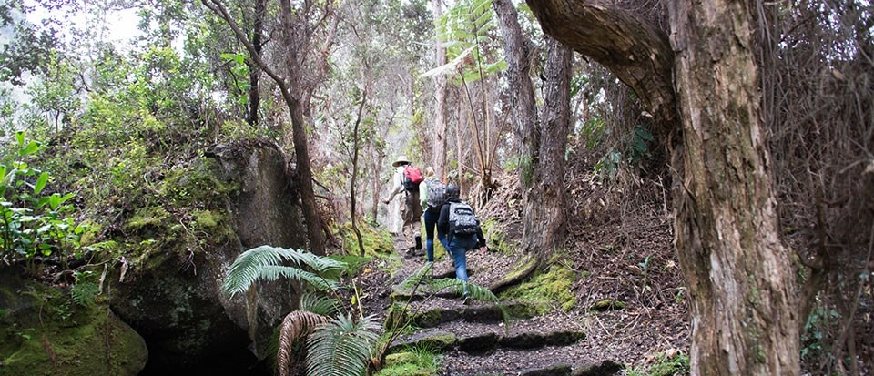 3 hikers climbing a set of stone steps in a forest.