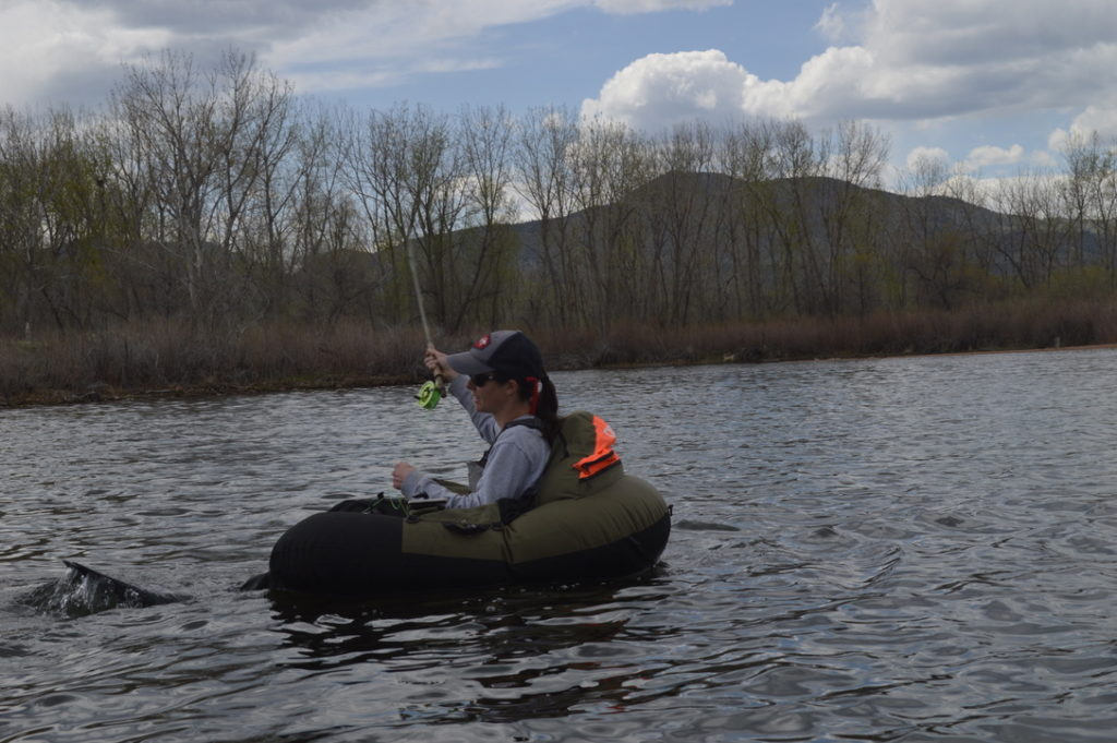A woman belly boating in a lake and fly fishing.
