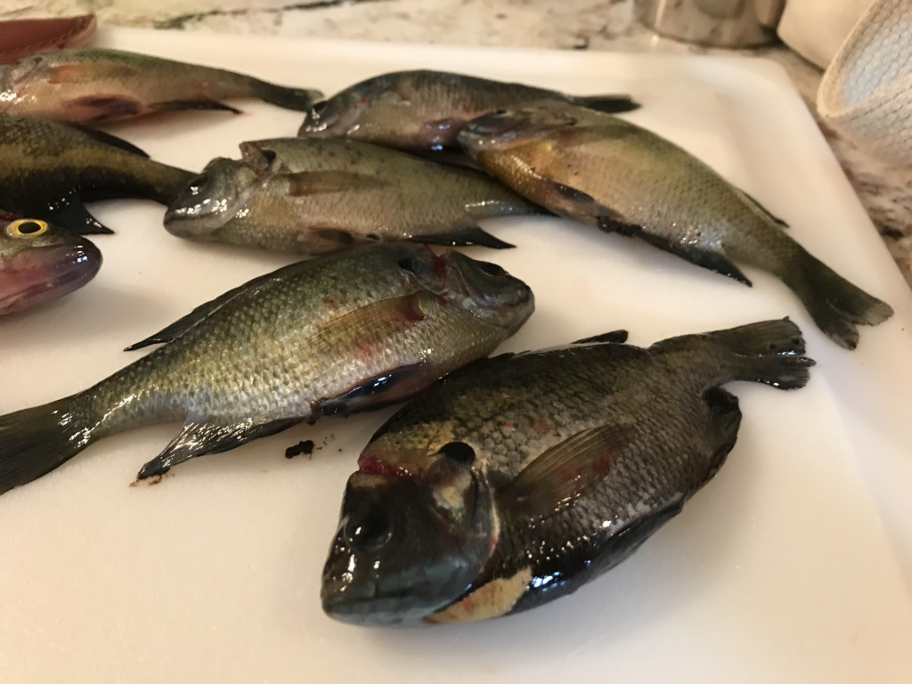 Several panfish sit on a cutting board.