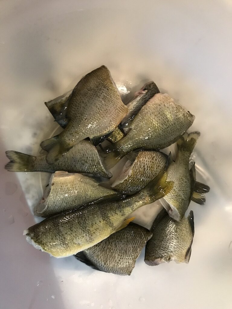 Multiple cleaned and gutted panfish in a bowl