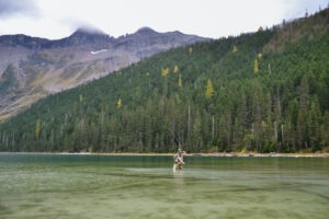 A woman casts a fly rod in a lake with mountains in the background