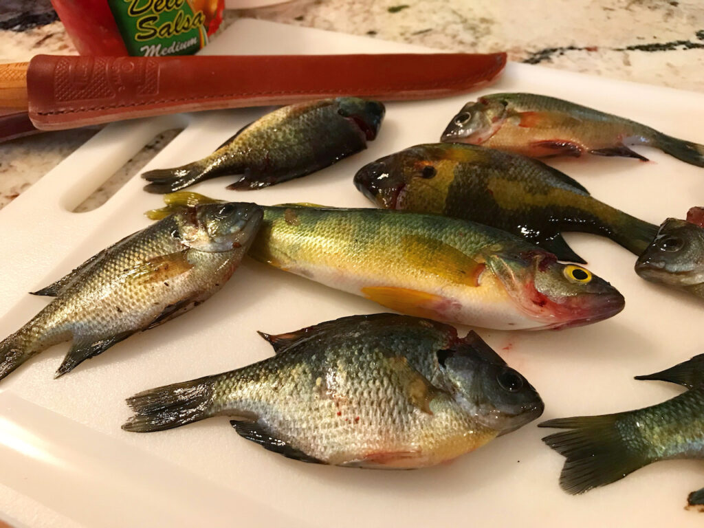 Several species of fish sitting on a cutting board.