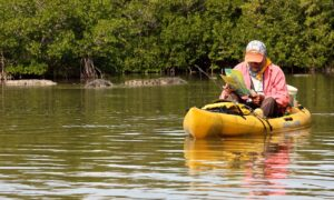 A man looks at a map while kayaking past an alligator in the Everglades